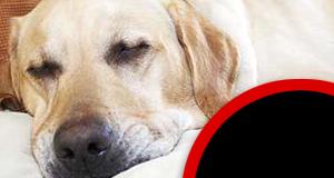 Le chien de Lionel Messi aurait été opéré (avec succès)