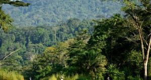 Ebola : La FAO engage la lutte contre le virus à l'interface homme-faune-écosystème