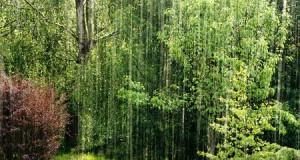 Pluviométrie : Les précipitations des derniers jours, l'arbre qui cache la forêt cette année en Guinée